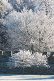 Trees covered in hoarfrost on a winter morning Royalty Free Stock Photography