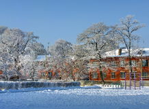 Trees covered with hoarfrost in yard. White trees on building background among snowdrifts Stock Image
