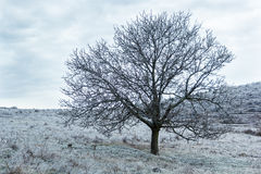 Trees covered with ice Royalty Free Stock Image