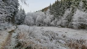 White trees in the Belgian Ardennes. Trees covered with ice during winter in the Belgian Ardennes royalty free stock photo