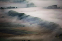 Trees covered by morning mist Royalty Free Stock Image