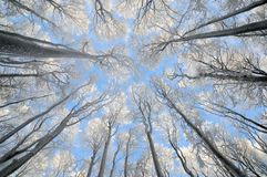 Trees covered with rime Royalty Free Stock Photos