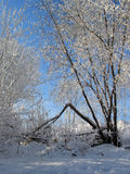 Trees covered with snow. Winter in Russia. Snow covers trees royalty free stock photos