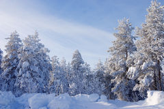 Trees covered by a snow Royalty Free Stock Photos