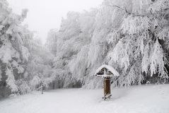 Trees covered with snow. Snow-covered trees shrouded in fog Stock Photos
