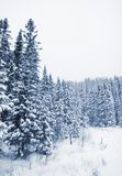 Trees covered of snow Stock Photos