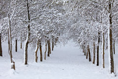 Trees covered with snow. In Tuscany Royalty Free Stock Photography