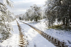 Trees covered with snow. And footprints tractor Royalty Free Stock Image