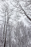 Trees covered by snow Stock Images