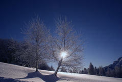 Trees covered by snow. A couple of trees covered with snow Stock Photo