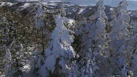 Trees covered with snow stock footage