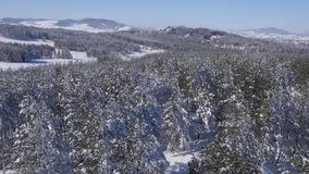 Trees covered with snow stock video