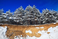Trees covered with snow against the blue sky Stock Photos