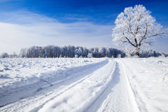 Trees covered with snow against the  sky Stock Image