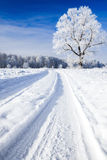Trees covered with snow against the  sky Royalty Free Stock Photography
