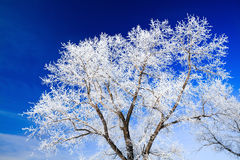 Trees covered with snow against the  sky Stock Photo