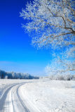 Trees covered with snow against the  sky Royalty Free Stock Images