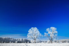 Trees covered with snow against the  sky Royalty Free Stock Photos