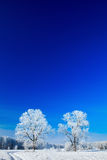 Trees covered with snow against the  sky Royalty Free Stock Photo