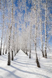 Trees covered with snow Stock Photography