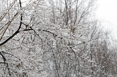 Trees covered by snow Royalty Free Stock Photography