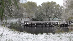 Trees covered with snow around the lake stock video footage
