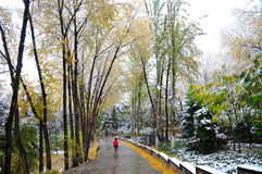Trees covered with snow. It is autumn, leaves and some yellow, some still green, the weather suddenly changes, lowered a heavy snow, the leaves covered with snow Royalty Free Stock Photography