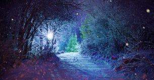 Trees covered with snow, dark sky and shining lantern through snowing. Park scene. Night shot. Trees covered with snow, dark sky and shining lantern through stock photos