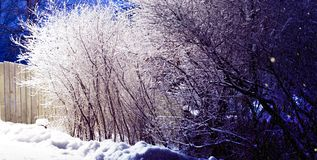 Trees covered with snow, dark sky and shining lantern on the snow-covered bushes. Park scene. Night shot. Trees covered with snow, dark sky and shining lantern stock images
