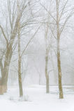 Trees covered with snow in the forest in thick fog Winter landsc Stock Photography