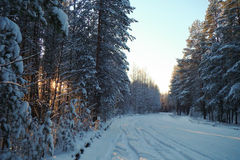 Trees covered with snow. Forest winter road between trees covered with snow Royalty Free Stock Photography