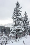 Trees covered by snow in Gaspesie Royalty Free Stock Images