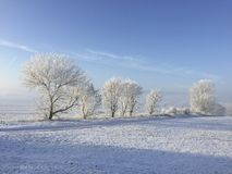 Trees covered with snow and ice in winter landscape royalty free stock image
