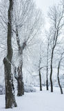 Trees covered with snow and ice in winter Stock Photography