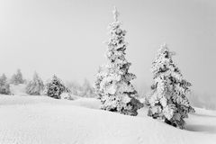 Trees Covered With Snow In Kalavrita Royalty Free Stock Images