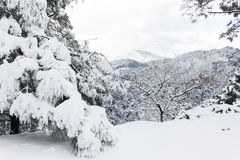 Trees covered with snow. A mountain road covered with snow Stock Photo