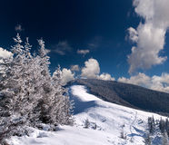 Trees covered with snow in mountains Stock Photo