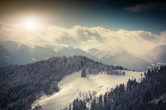 Trees covered with snow in mountains. Retro style. Royalty Free Stock Photography