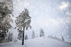 Trees covered with snow in the mountains Royalty Free Stock Images