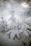 Trees covered with snow in the mountains Royalty Free Stock Image