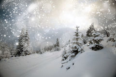 Trees covered with snow in the mountains Stock Photos