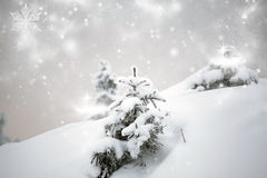 Trees covered with snow in the mountains Stock Photo