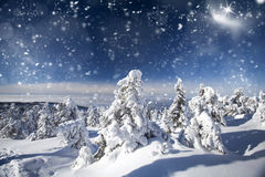 Trees covered with snow in the mountains Stock Photography