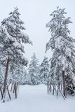 Trees covered in snow near Sirkka in Lapland, Finland Stock Image