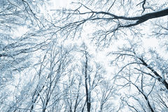 Trees covered snow over winter sky Royalty Free Stock Images