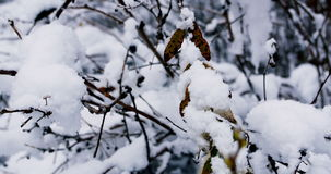 Trees covered in snow stock video