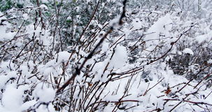 Trees covered in snow stock video footage