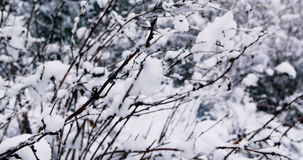 Trees covered in snow. During snowfall stock video footage