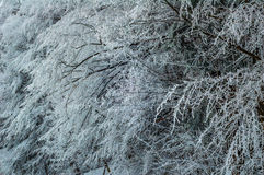 Trees covered with snow Stock Images