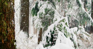 Trees covered in snow. During winter stock video footage